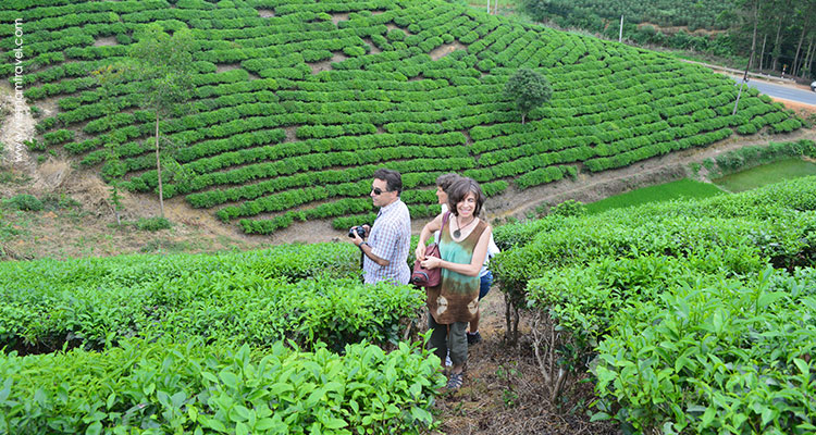 Vietnam-Hagiang-Teahill-2