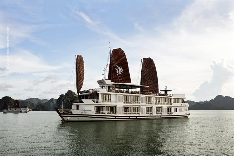 Pelican-Cruise-7