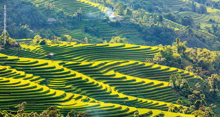Beautiful terraced rice fields in Hoang Su Phi, especially in late September and October