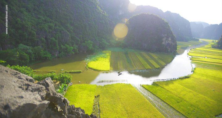 Golden rice field in Ninh Binh