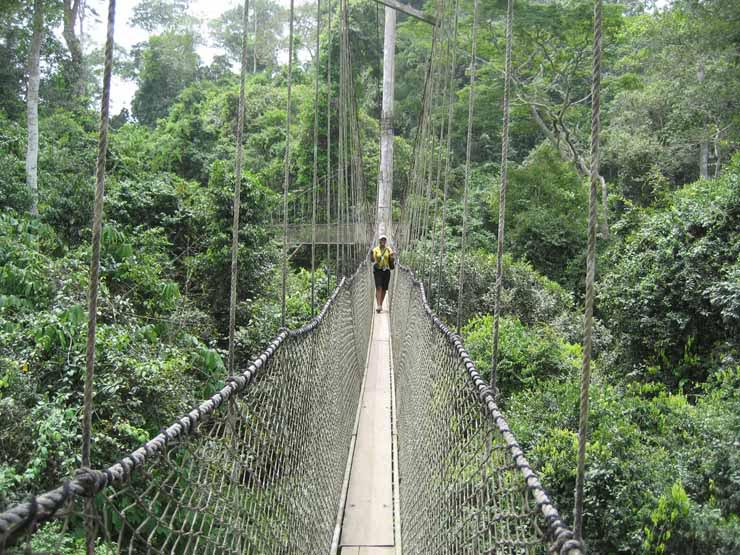The Canopy Walk