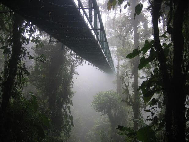 The Montenegro Rainforest Bridge