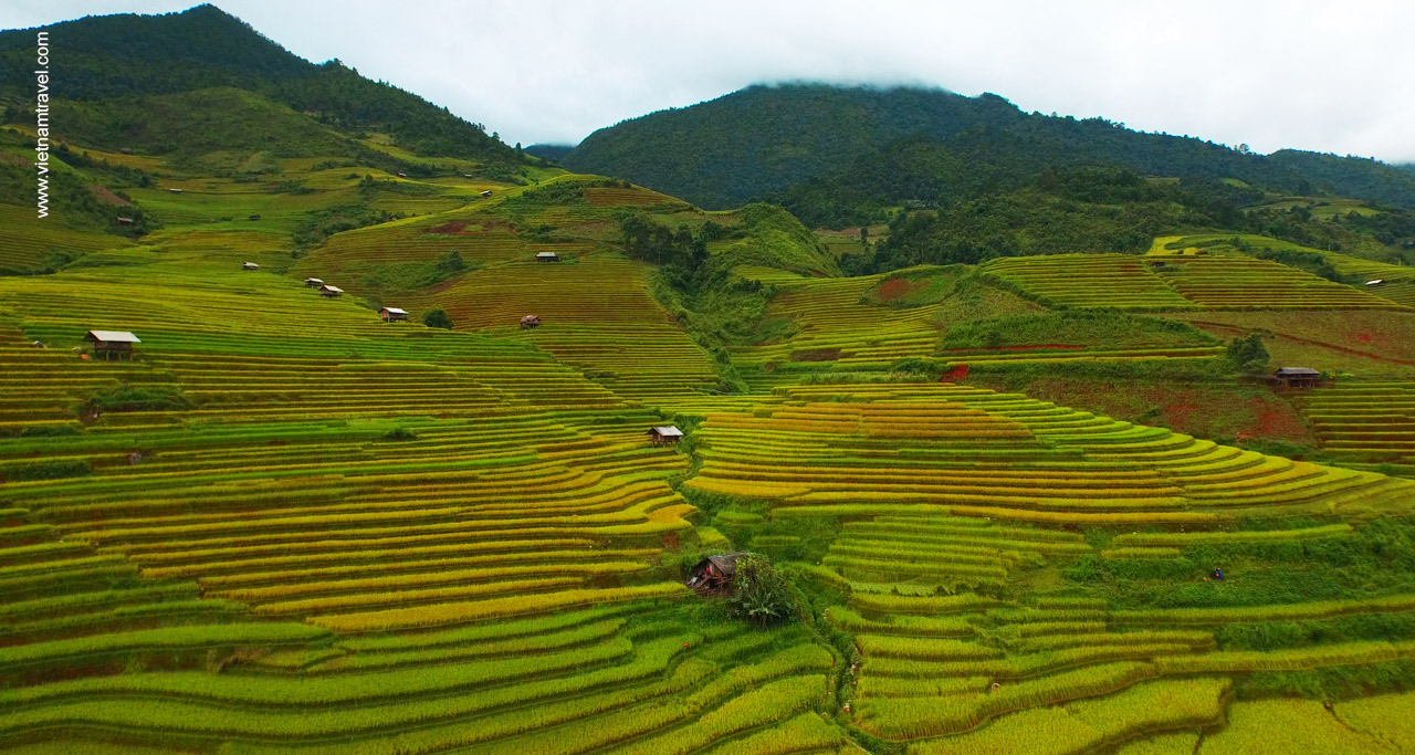 imgage of rice terraces