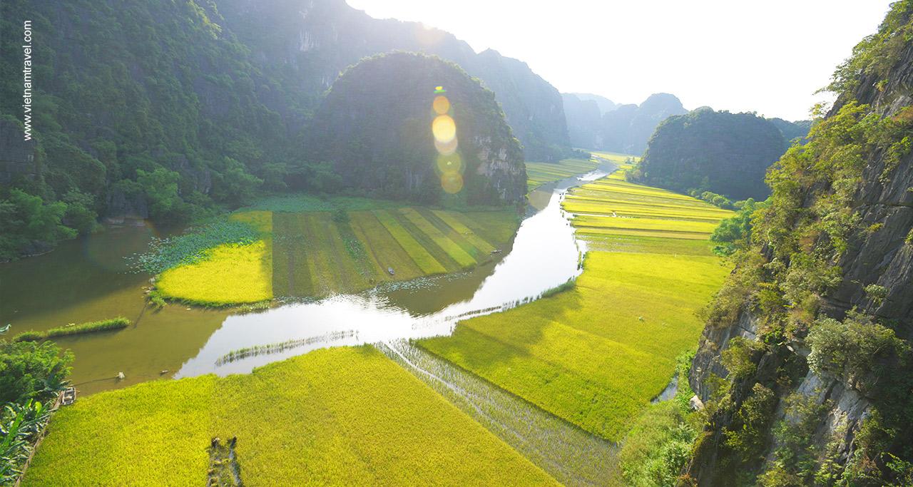 rice field ninh binh