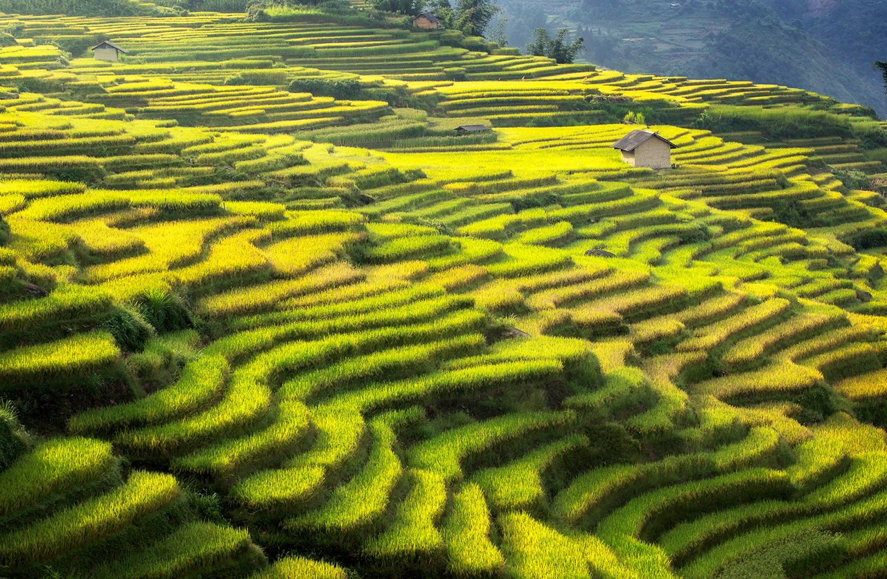 Y Ty terraced rice paddy