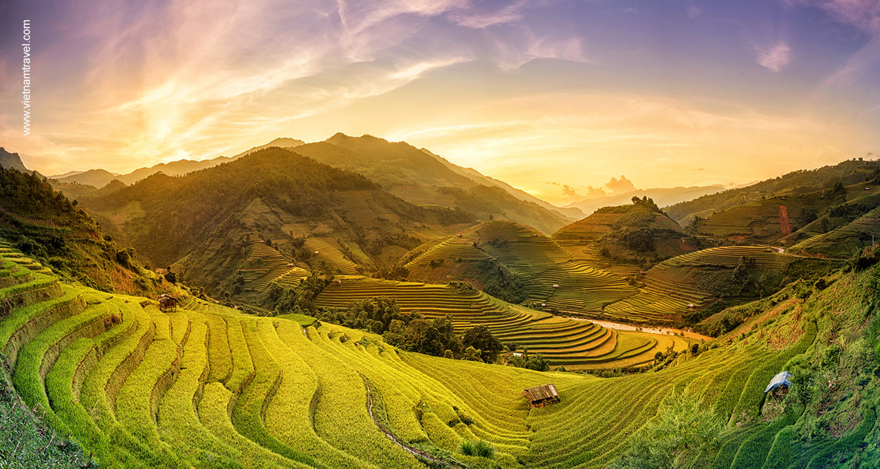 rice field in Northern Vietnam