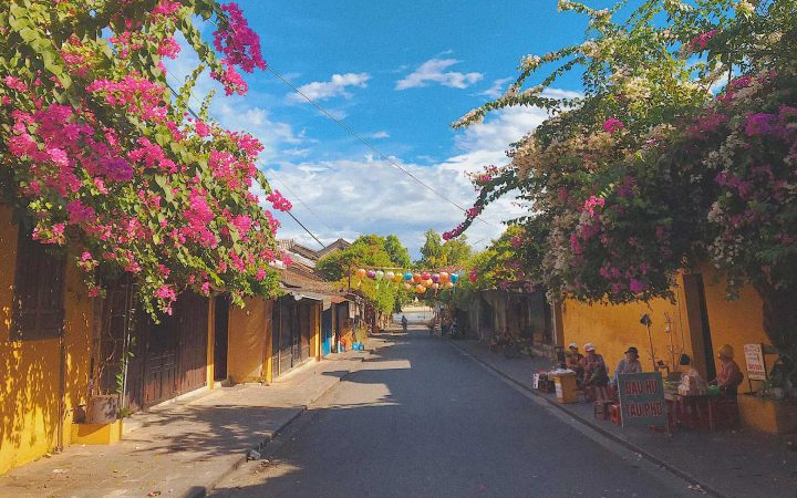 Hoian Town – the most stunning place to see the bougainvillea bloom at its greatest vigor.