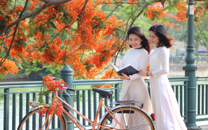 Flamboyant flower – the school age flower, connects to the school memories of many Vietnamese student generations.
