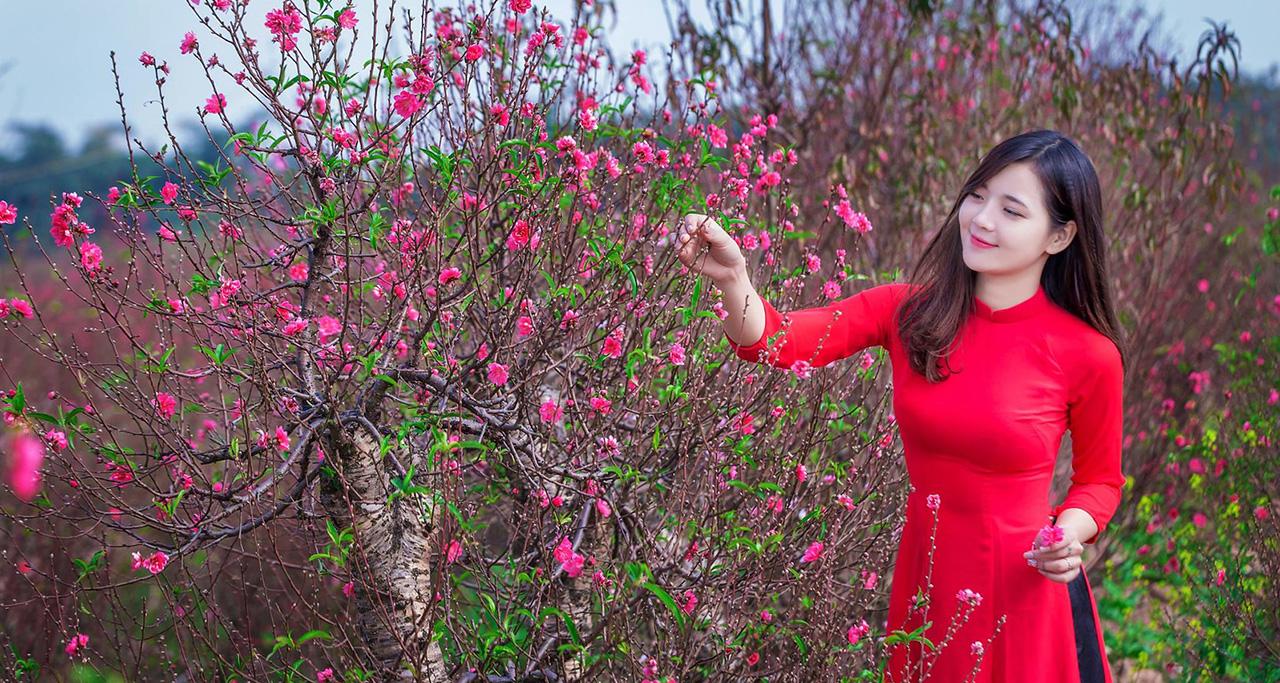 Peach blossom in Nhat Tan, Hanoi in Feb
