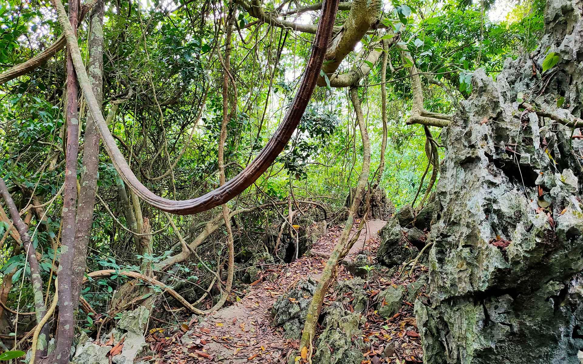 Trekking trail on Cat Ba national park