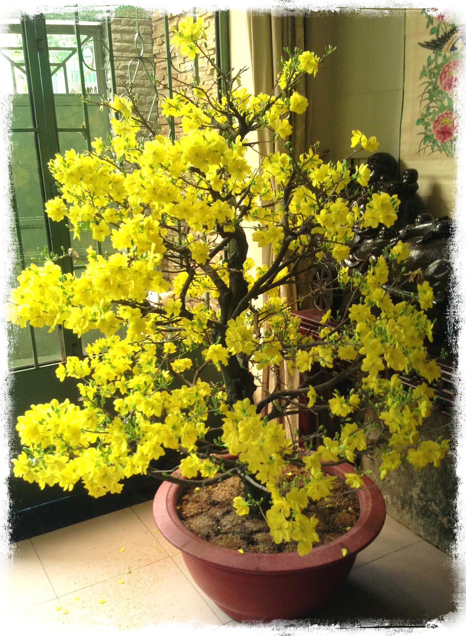 Yellow Apricot Flower is the must have Vietnamese flowers in spring.