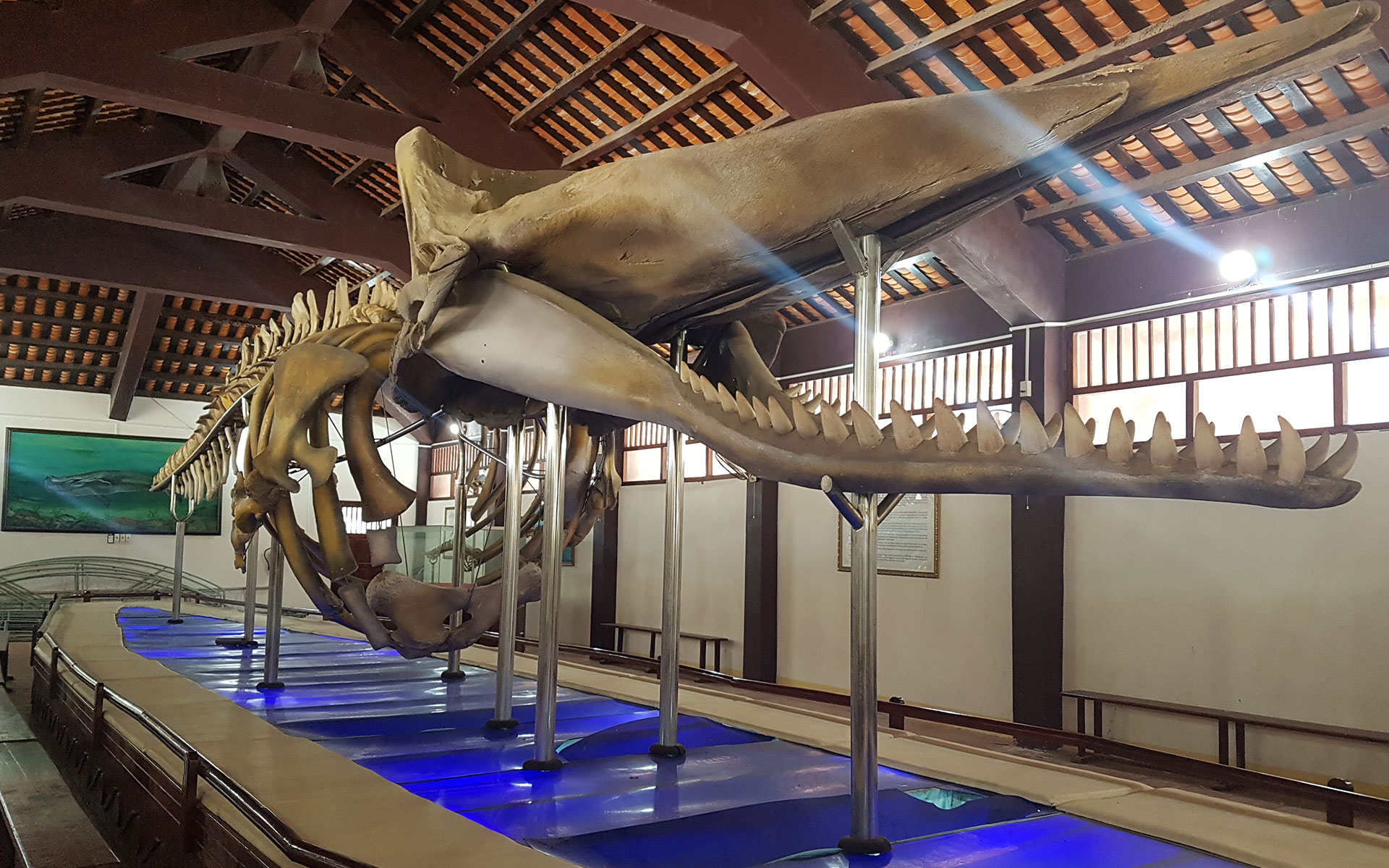 The huge whale skeleton in Van Thanh An Whale Temple