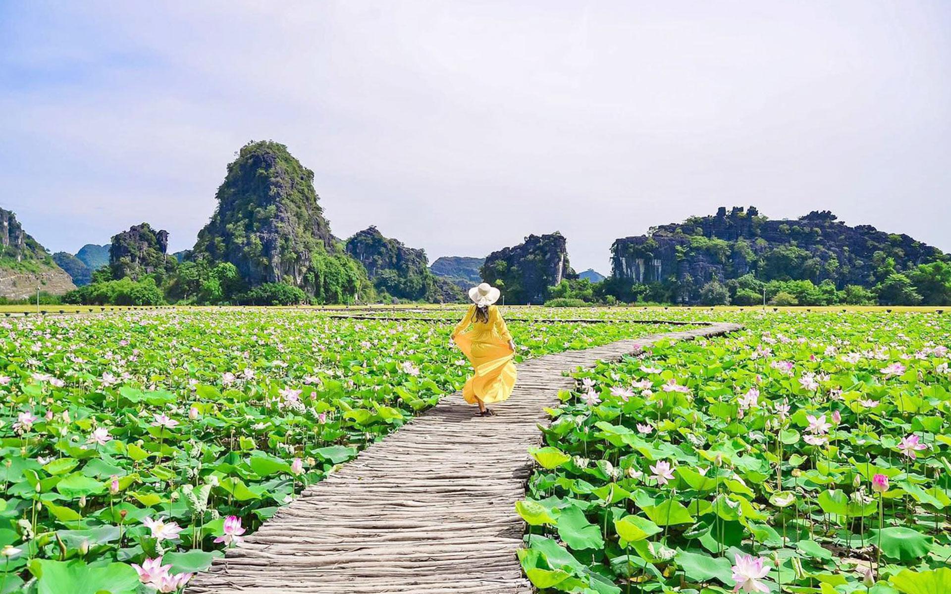 lotus lake in Ninh Binh