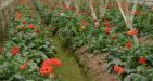 tay-tuu-flower-village-10