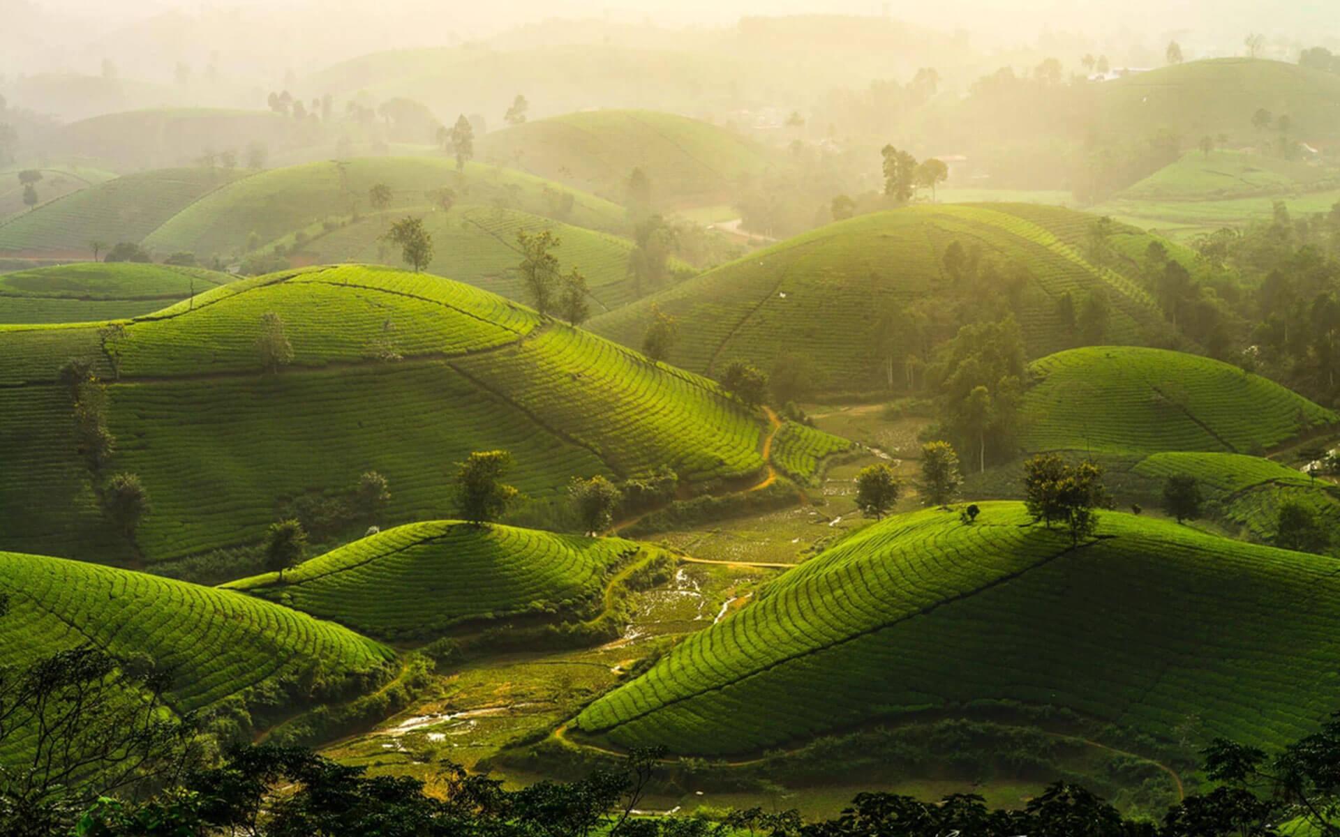 Vietnam Tea - Vietnamese tea - VietnamTravel.Com