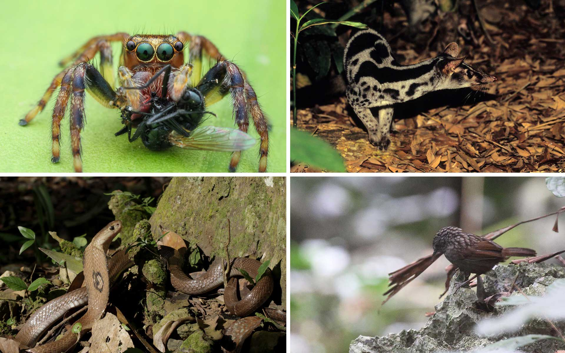 Wildlife discovering and bird watching in Cuc Phuong National Park