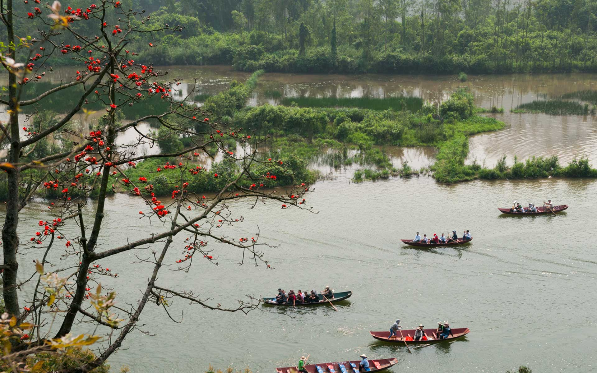 Tourists take boat trip along Yen Stream during red silk cotton flower blooming season.