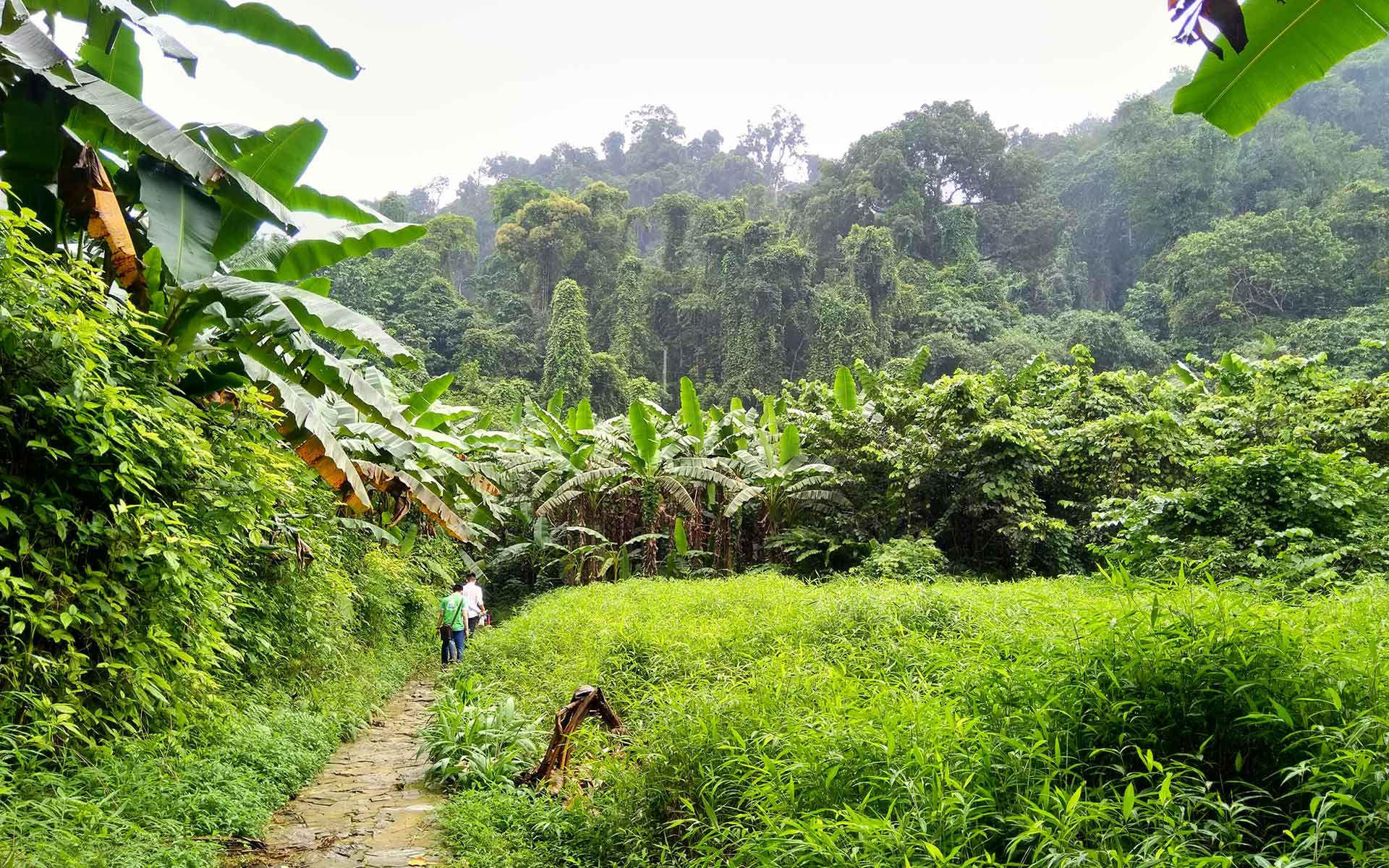 Trekking in the primary forests