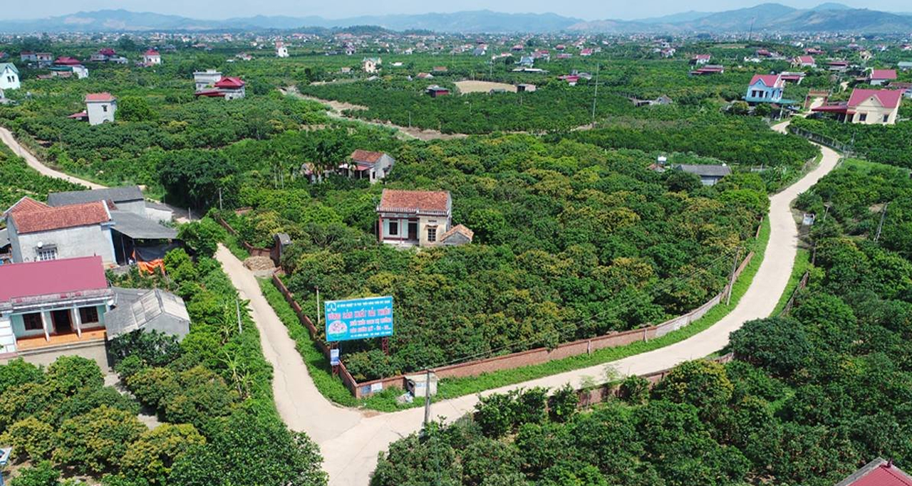 Lychee farms cover whole 9 km of drive from Luc Ngan Town to Khuon Than