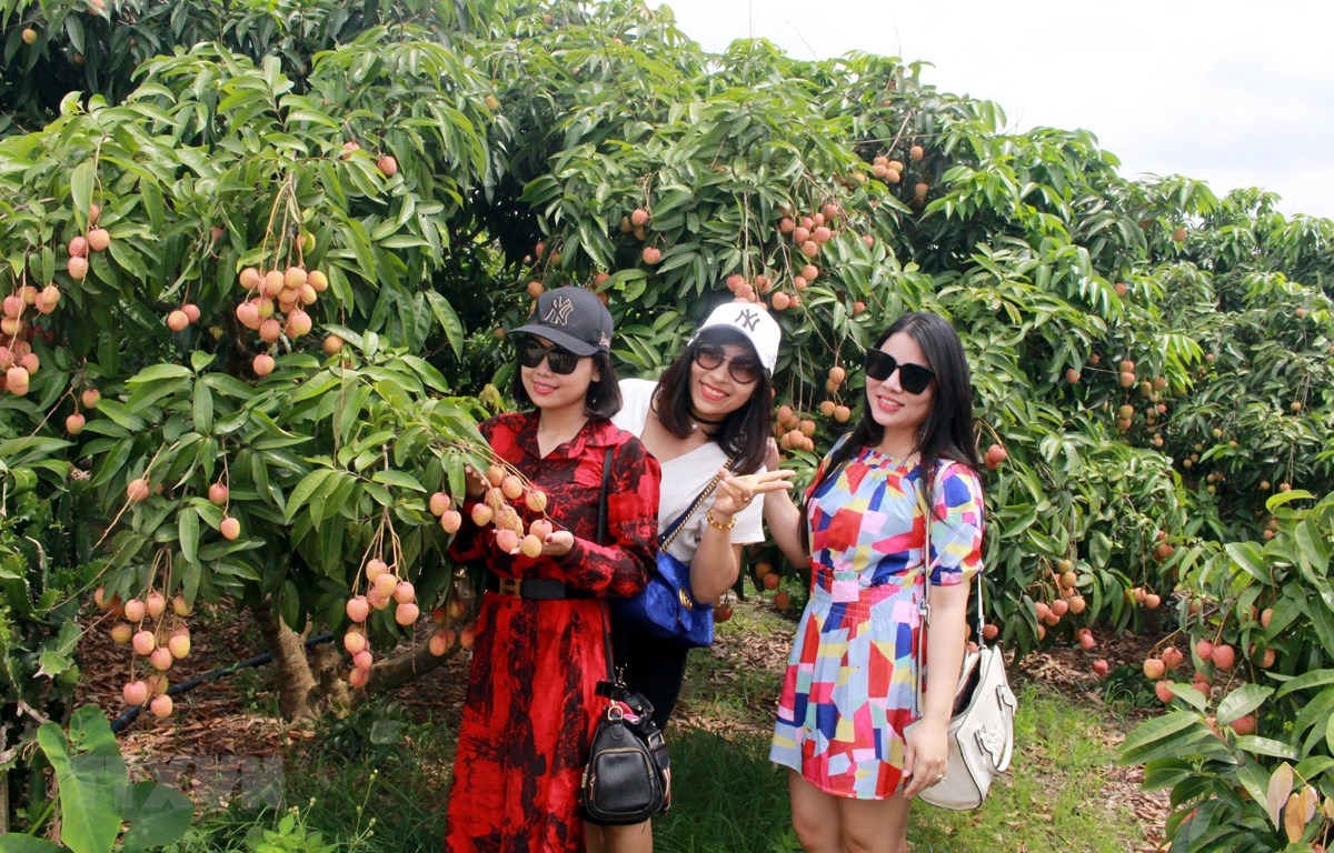 Season of Lychee in May and June