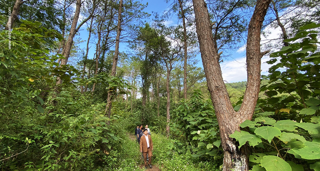 Forest in Khuon Than