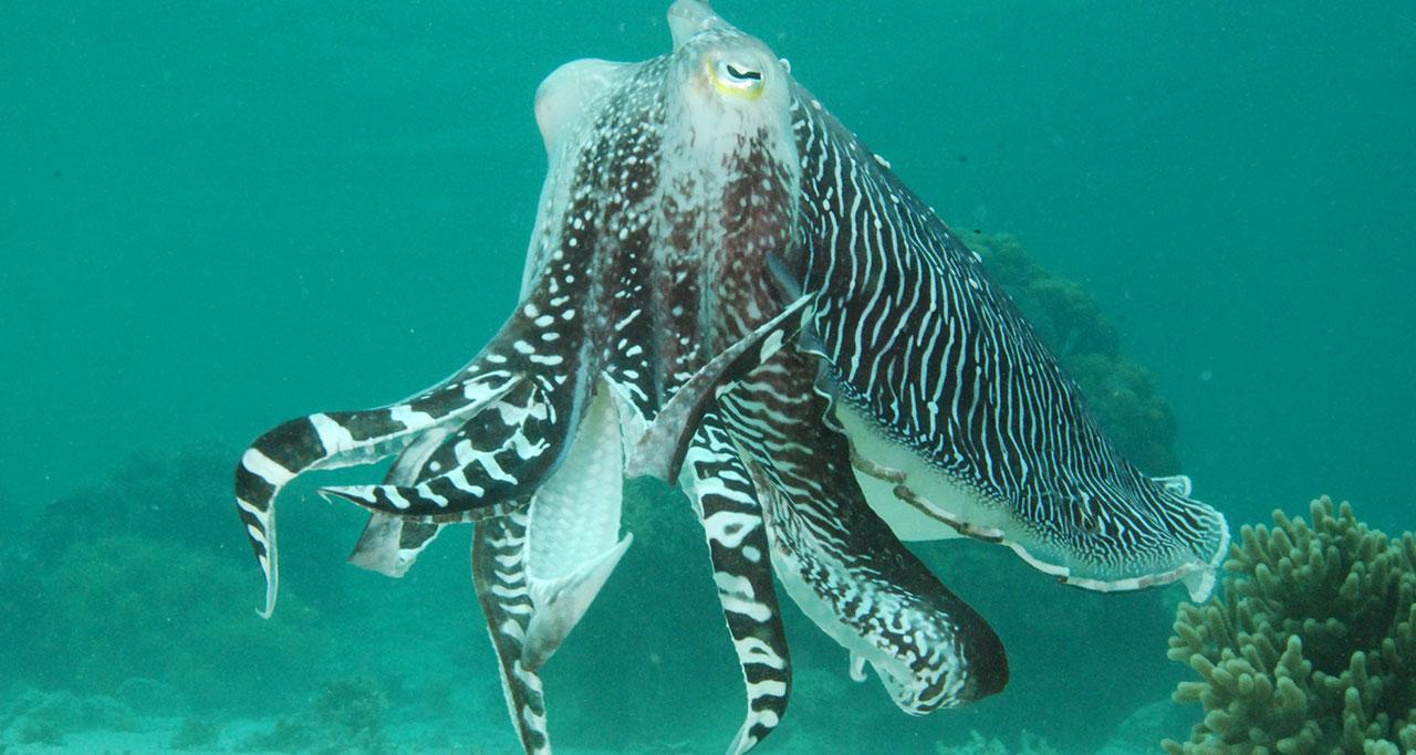 octopus in Fingernail Island