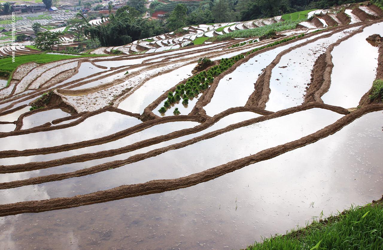 Sapa terrace fields