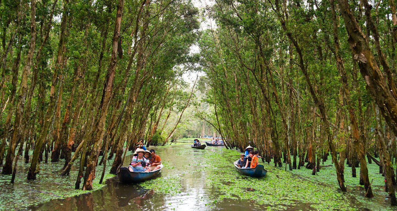 The only way to go deeply inside Tra Su Forest is by boat with local tour guide