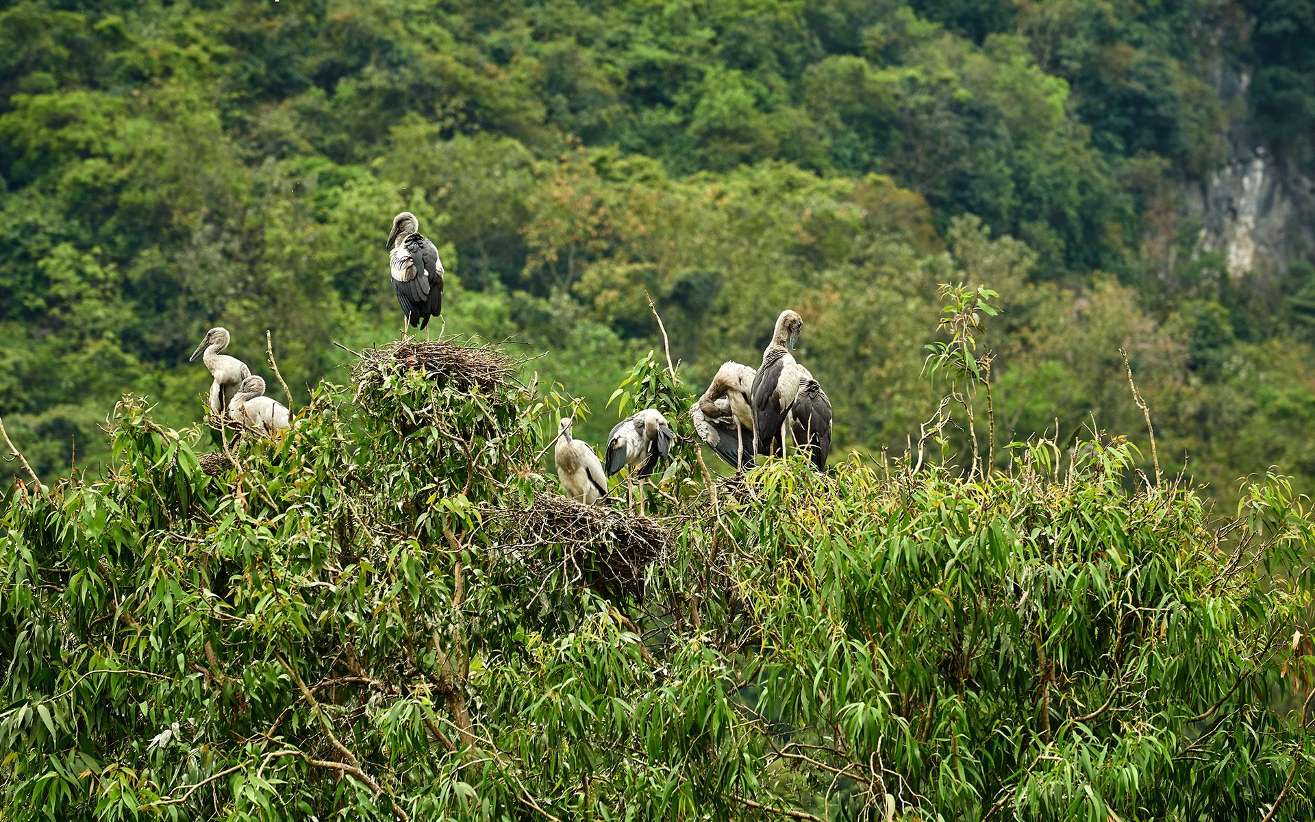 Visit Thung Nham Bird Garden