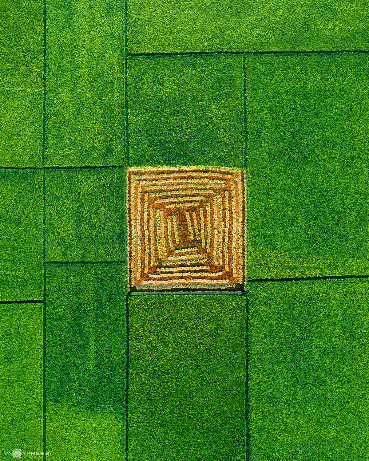 Green rice fields in Vinh Linh (Quang Tri)