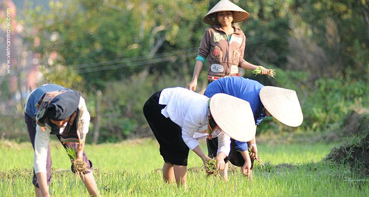 vietnam-DienBien-7