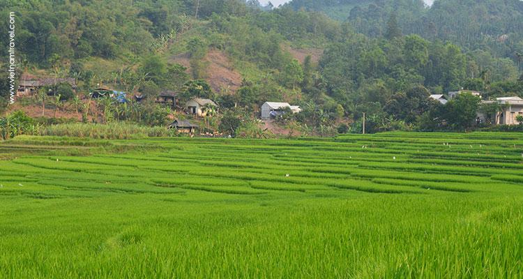 Vietnam-MaiChau-10