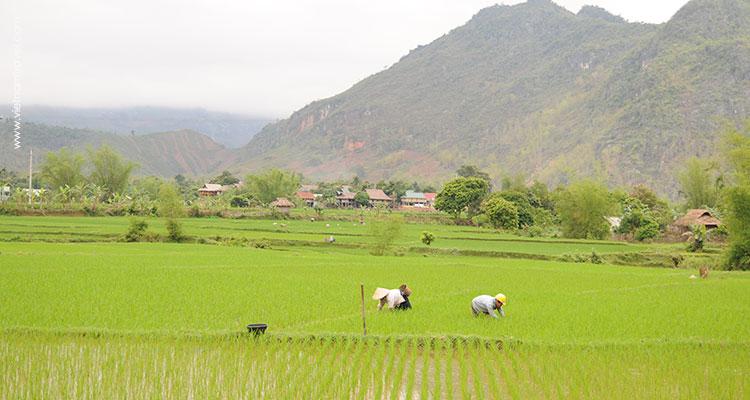 Vietnam-MaiChau-4